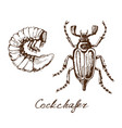 may bug sketch vector image vector image
