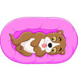 cute little dog on the pillow showing a tongue vector image vector image
