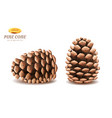 isolated 3d pine cones or realistic tree part vector image