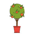 orange tree in bucket vector image vector image