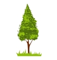 picture with green tree vector image vector image