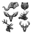 sketch icons of wild animals heads vector image vector image
