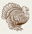 turkey on white background thanksgiving theme vector image vector image