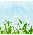 Floral background with white snowdrops vector image