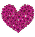 heart of pink phlox flowers isolated on white vector image vector image