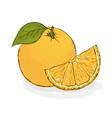 ripe juicy orange still-life from fruit hand vector image vector image