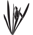 snowdrop silhouette vector image vector image
