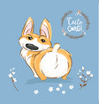 cute corgi dog puppy back tail vector image vector image