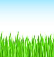 green grass field vector image vector image