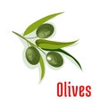 Olive branch with olives vegetable icon vector image