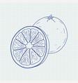 orange sketch vector image