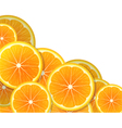 Orange slices vector image vector image