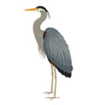 wild life isolated animals great blue heron vector image