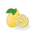 yellow sour juicy lemon still-life from fruit vector image vector image