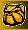 bulldog annimal head yellow logo icon vector image vector image