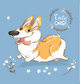 excited corgi dog run tongue out poster vector image vector image