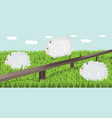 sheep grazing the grass vector image