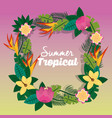 summer tropical flower differents frame orname vector image