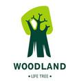 woodland isolated icon tree plant ecology vector image