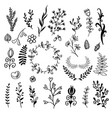 a set hand-drawn plants doodle vector image vector image