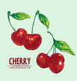 digital detailed color cherry hand drawn vector image vector image