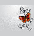 gray background with peacock butterfly vector image