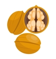 Pile of nuts walnuts vector image