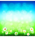 Green grass and blue sky with flowers vector image vector image