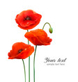 red poppy flowers isolated on white background vector image vector image
