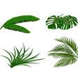 set green leaves of banana coconut monstera vector image vector image