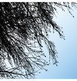 tree branches vector image vector image