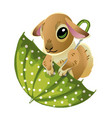 cute rabbit in a green umbrella isolated on white vector image