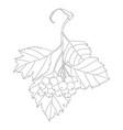 hawthorn branch vector image