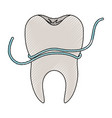 tooth with root and dental floss around in colored vector image vector image