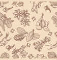 hand drawn spices seamless pattern vector image vector image