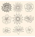 Set of Flower vector image vector image