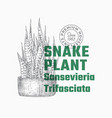 snake plant abstract sign or label template vector image