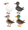 Four cartoon duck in different colors vector image vector image