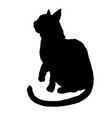 black cat silhouette isolated on white background vector image vector image