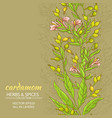 cardamom background vector image vector image