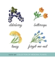 Collection of medicinal plants1 vector image