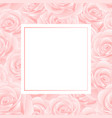 pink rose banner card vector image vector image
