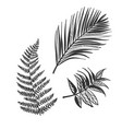 sketch design elements plant leaves palm fern vector image