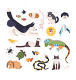 collection of pets isolated on white background vector image vector image