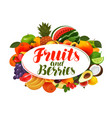 fruits and berries banner natural food vector image vector image