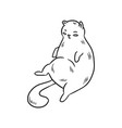 cute fat cat for greeting cards vector image