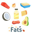 fat food healthy diet oil avocado or fatty vector image