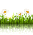 Green grass lawn with chamomiles and reflection on vector image vector image