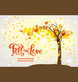maple fall tree vector image vector image