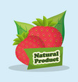 strawberry natural product market design vector image vector image